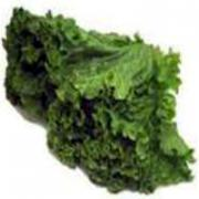 Green Leaf Lettuce