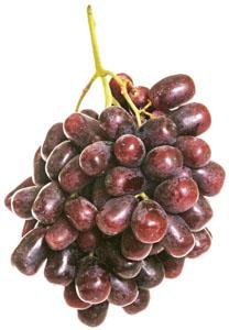 Premium Black Grapes