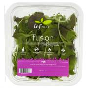 Lef Farms Fusion Baby Red and Green Leaf Lettuce