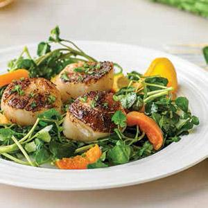 Cocoa-dusted Scallops with Watercress and Apricots