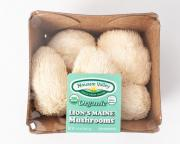 Mousam Valley Organic Lion's Mane Mushrooms