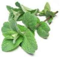 Bunched Mint