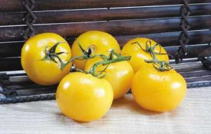 Yellow Vine Cluster Tomatoes