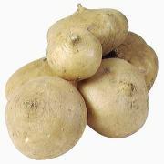 Jicama Root