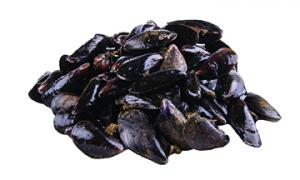 Local Gulf of Maine Mussels