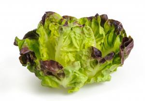 Organic Red Bibb Lettuce
