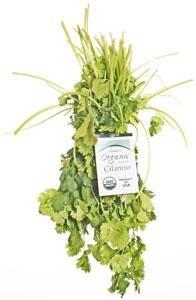 Nature's Place Organic Bunch Cilantro