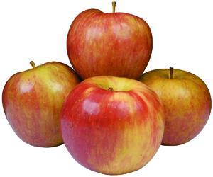 Patch Orchard Honeycrisp Apples