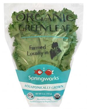 Springworks Farm Organic Green Leaf Lettuce