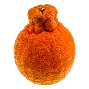 Sumo Mandarins