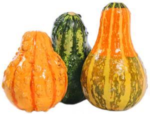 Edible Ornamental Squash/Gourd