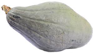 Organic Blue Hubbard Squash