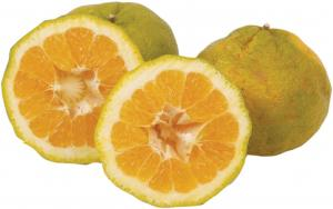 Uniq Fruit