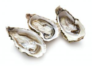 Local Gulf of Maine Duxbury Oysters