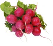 Bunched Red Radishes