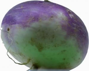 Hakurai Turnip