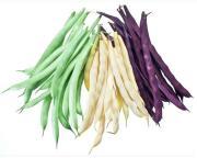 Multi Color Beans